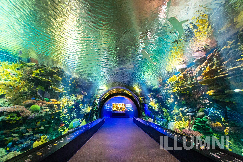 Нью- Йоркский аквариум